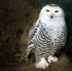 Posing de Alida Jorissen sur 500px.com