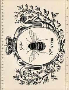 Printable Clipart Vintage HONEY BEE graphics In Frame &