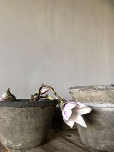 Pot met roze bloemen Plants, Art Of Living, Plant, Planets