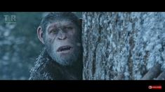 Caeser in War for the Planet of the Apes  ❤❤❤ #Caeser #warfortheplanetoftheapes #apestogetherstrong #planetapes50th