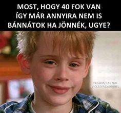Humoros képek Me Too Meme, Funny Pictures, Jokes, Lol, Pets, Random, Happy, Animals, Quote