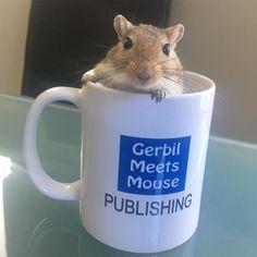 Being silly! #gerbil #gerbils #rodents #pet #pocketpet #hamster #rat #petsofinstagram