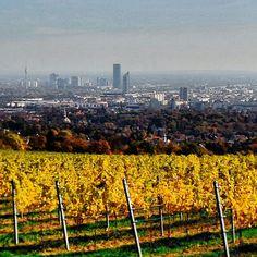 Vienna Vineyards Kahlenberg Visit Austria, Danube River, Central Europe, Slovenia, Alps, Seattle Skyline, Vienna, Switzerland, Travel Destinations