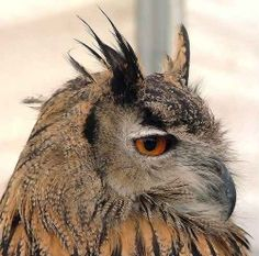 Owls and the Myths and Legends  surrounding them are fascinating, especially in the Native American and Alaskan Native beliefs. Owls have been...
