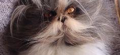 Αυτή η γάτα έχει τρελάνει το Internet: δες γιατί