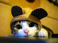 ノーチェンジ確定。最高に帽子の似合う猫たちの写真と、自らウサギの帽子を装着する猫の動画。 : カラパイア