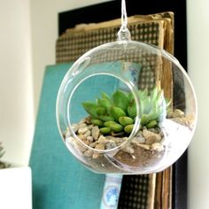 Clear Glass Terrarium Air Plant Home Decor Candle Candle Holder