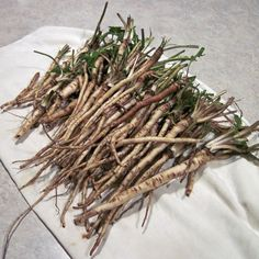 Harvesting and drying dandelion roots.