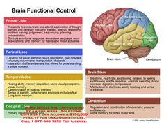 Brain Chart And Functions Of Parts Design Articles That Re So Overwhelmed By Lot Diagram Functi
