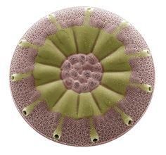Diatom, Sem. Electron microscope picture by  Steve Gschmeissner