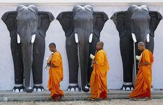 kelledia:    Sri Lanka.