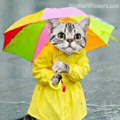 Weather Whiskers Cat knows the rain is here. Gives 4 Paws Down!