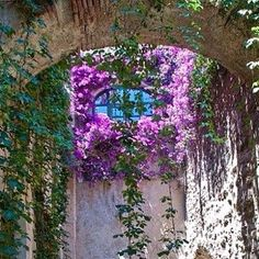 Cortili fioriti  #inspiration #instagarden #instagardenlovers #instaflower #elegance #fiori #fleurs #flowers #garden #giardino #jardin #chic #colours #blooms #nature #natural #buganvilla #mystyle #myidea #myflowers #marinacanazzad #