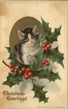 CHRISTMAS Cute Kitten w Wide Eyes HOLLY BORDER c1910 Postcard