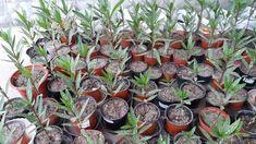 Succulents, Plants, Garden Ideas, Gardening, Decor, Decoration, Lawn And Garden, Succulent Plants, Plant