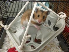Managing Bar Chewers - Hamster Central
