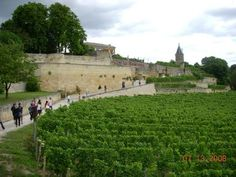 Bordeaux Vineyards Wine Tasting Half-Day Trip - Bordeaux | Viator