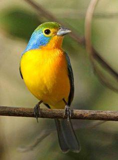 Gyönyörű szép madár