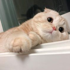 Awesome Beautiful cats tips are available on our internet site. Check it out and you wont be sorry you did. Cute Baby Cats, Cute Cats And Kittens, Cute Funny Animals, Cute Baby Animals, I Love Cats, Kittens Cutest, Funny Pets, Pretty Cats, Beautiful Cats