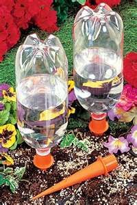 Deep Root Watering For Plants Using A 2 Liter Soda Bottle