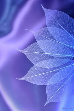 Фотография Blue syndrome~Feeling for spring автор Lafugue Logos на Colorful Wallpaper, Wallpaper Backgrounds, App Wallpaper, 2 Clipart, All Things Purple, Pretty Wallpapers, Cellphone Wallpaper, Shades Of Purple, Belle Photo