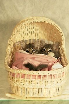 Sweet dreams--Oh mt goodness! If I ever get any more kitties, they WILL get a bassinet!