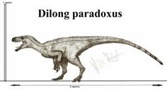 Dilong, an early tyrannosauroid from asia. It is one of the more poluar tyrannosaur ancestors. It already showed signs of later tyrannosaurs like&. Dinosaur Drawing, Dinosaur Art, Creature Concept Art, Happy Tree Friends, Prehistoric Creatures, Backyard Birds, Prehistory, Zoology, Jurassic Park