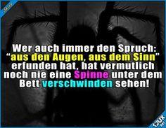 Die sind nicht so schnell aus dem Sinn! x.x #Spinne #Sprichwort #sowahr #lustigeSprüche #Humor #Jodel #Sprüche #Angst Humor