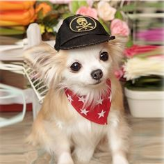 Lovely and pleasant Doggy bandana star for your cute pet dogs @ https://www.gokoco.com/lovely-and-pleasant-doggy-bandana-star-for-your-cute-pet-dogs.html #petaccessories #clothesforpets #petclothing #doggybandanastar #bandanaforpetdogs