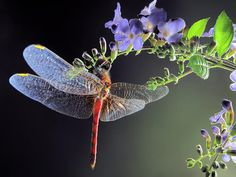 Dragonfly  By: Jim Hoffman