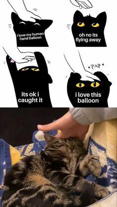 Funny Animal Jokes, Cute Funny Animals, Animal Memes, Funny Cats, Like Animals, Cute Little Animals, Happy Animals, Cute Cats And Kittens, Kittens Cutest