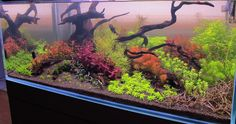 120 gallon Dutch Planted something or another - Aquarium Plants - Barr Report