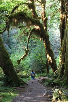 Hoh rainforest, Olympic Peninsula, Washington - where we went camping when I was growing up