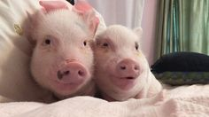 Pin for Later: Instagram's Most Adorable Animal Duos