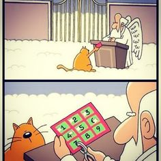 Heaven Isn't Too Far Away - LOLcats is the best place to find and submit funny cat memes and other silly cat materials to share with the world. We find the funny cats that make you LOL so that you don't have to. Funny Cute, Funny Jokes, Funny Stuff, Kid Jokes, Funny Gifs, Videos Funny, Memes Humor, Cat Memes, Funny Cartoons