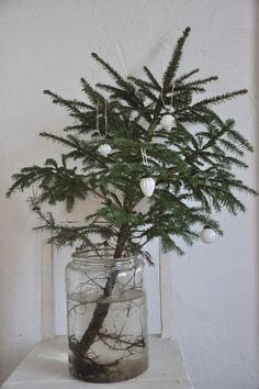 where do you find a little spruce and not feel bad about pulling it up by it's roots?  this is so simple and pretty.