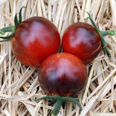 Blue Tomato Bosque Blue ブルートマト・ボスク・ブルー