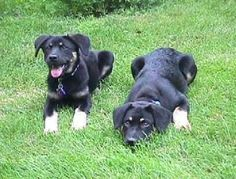 Lady and Bear-Adopted 1999 (RIP Bear 2010)-From Animal Rescue League of Iowa www.arl-iowa.org