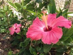 お花 flower -竹富島