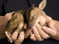 5 Animals That Make Cute Pets.  Marcail did you see this baby doe?!! All creatures great and small.