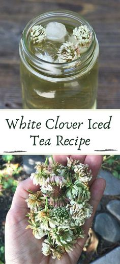White Clover Iced Tea Recipe #healthydrink #easyrecipe