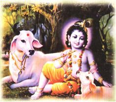 Cows are very sacred to the Hindus,because it is a source of food and a symbol of life
