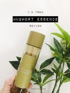 I'm from Mugwort Toner Review Essence Medicinal Herbs, Beauty Review, Pimples, Vitamins And Minerals, Tea Tree, Skin Care Tips, Your Skin, Skincare, Healing