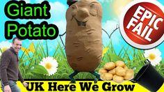 World Record Giant Potato Attempt Epic Fail