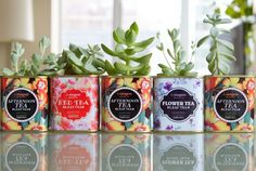 Tea Can Succulents Growing Succulents, Succulents Garden, Tea Tins, Welcome To The Jungle, Flower Tea, Cottage Style, Afternoon Tea, Things To Do, Planter Pots