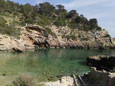 Cala olivera