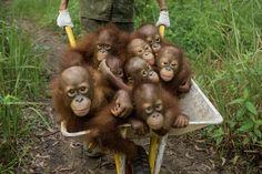Not a barrel of Monkeys http://ift.tt/2rrd2J6 #Puppy #Puppies #Pics #Dog #Adopt #Pets #Animals