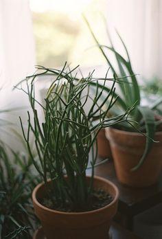 I can't help it. I just love houseplants.