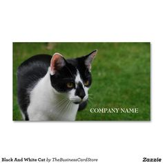 Black And White Cat Double-Sided Standard Business Cards (Pack Of 100)
