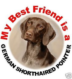 2 German Shorthaired Pointer Car Stickers By Starprint